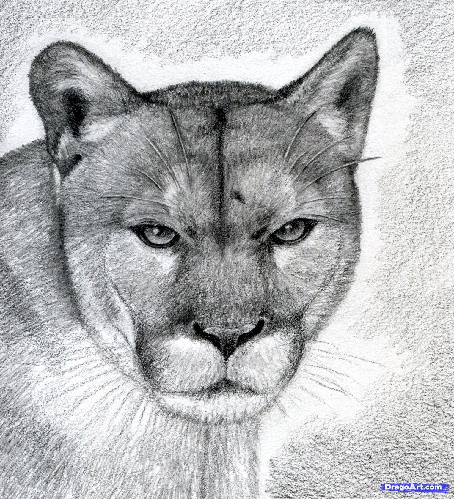 Drawn mountain realistic Drawing Lion lion Mountain Mountain