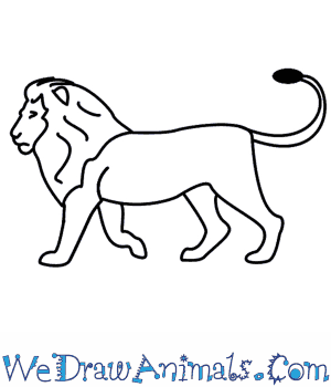 Drawn simple lion How  A To Lion