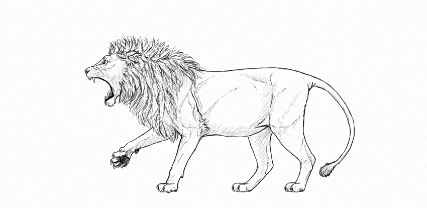 Drawn profile lion Step step a to by