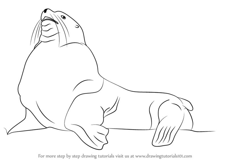 Drawn steller's sea eagle detailed Draw Lion Mammals) How Sea