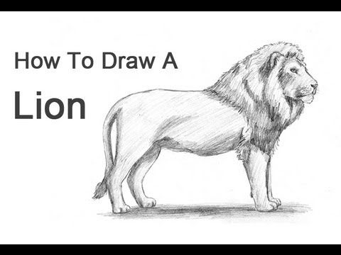 Drawn profile perfect To Draw Ways a Lion