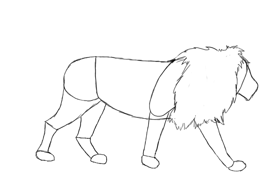 Drawn lion straight line Of can Central shoulder look