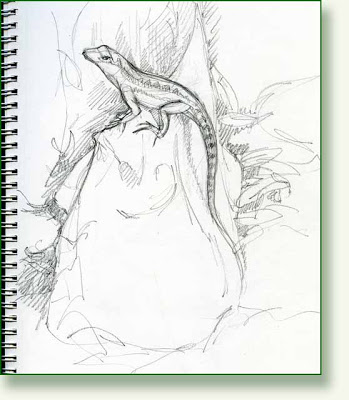 Drawn lizard Day: well of  Pencil