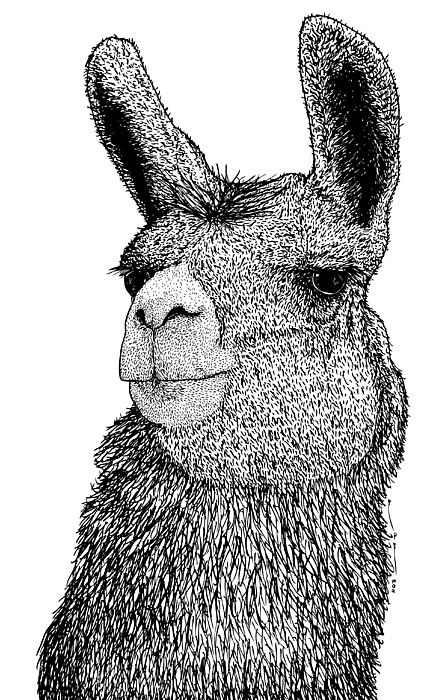 Drawn llama Art Llama Realistic Drawing Drawing