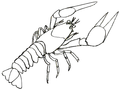 Drawn lobster Clipart Lobster 64 cliparts of