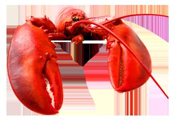 Drawn lobster Pot Fish near Shellfish Daily