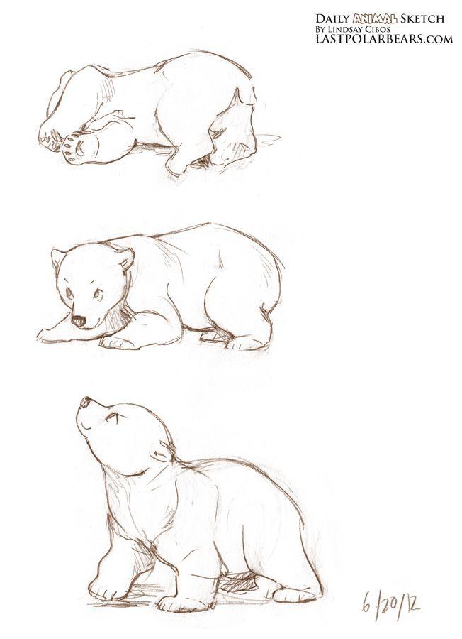 Drawn polar  bear sketch Daily_Animal_Sketch_099 Animal best 25+ sketches