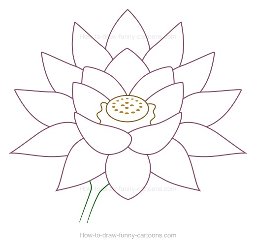 Drawn lotus  flower a How to