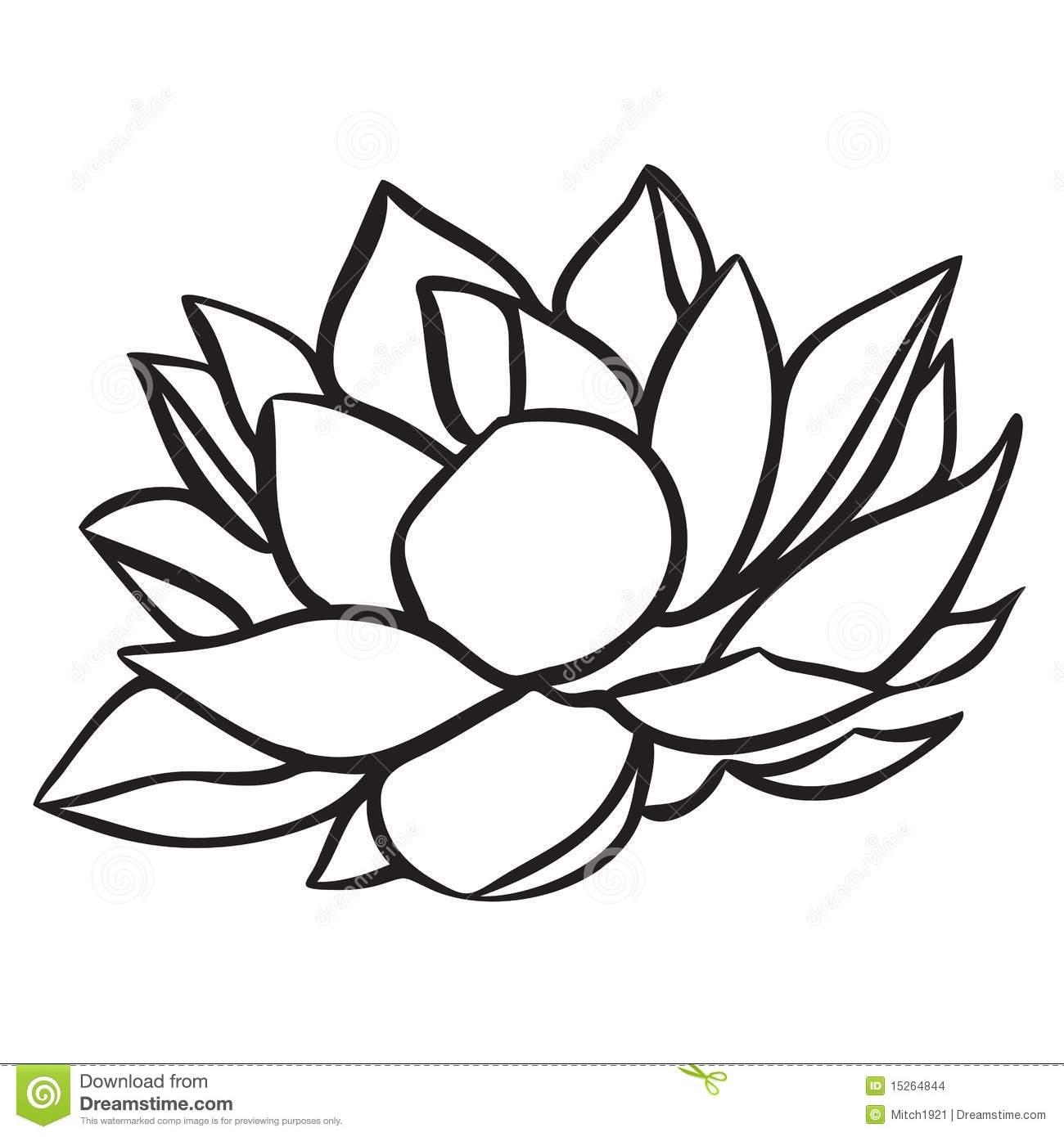 Drawn lotus White and Lotus Gallery Black