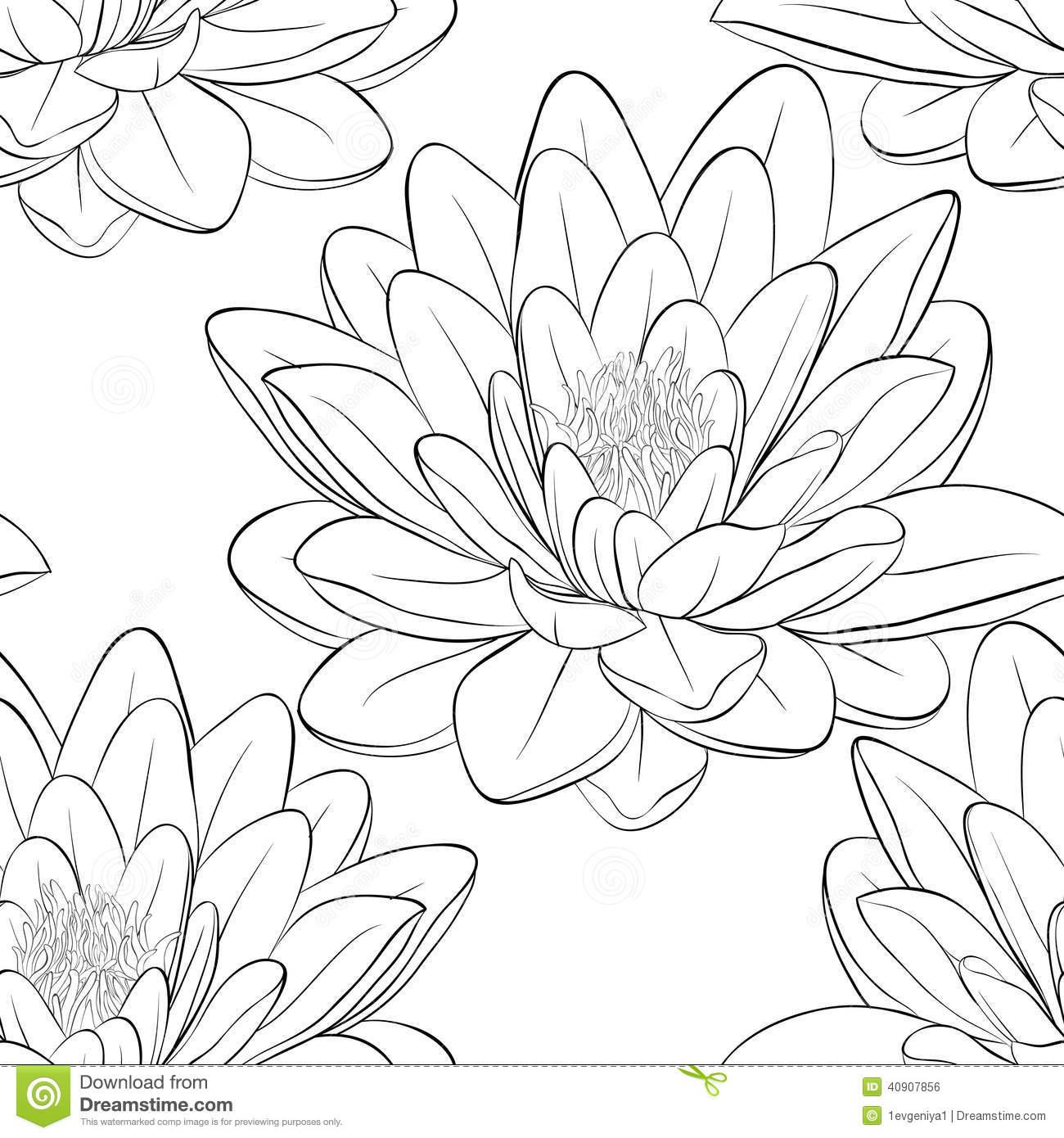Drawn lotus  Outline black Japanese drawing