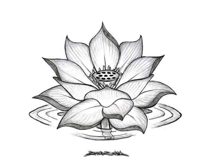 Drawn lotus On lotus 20+ drawings Search