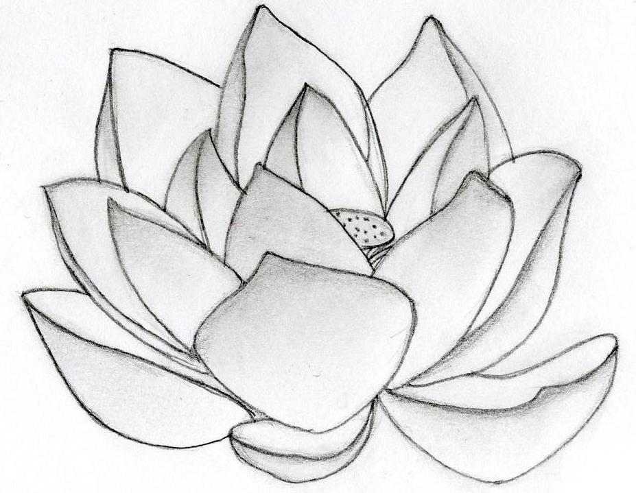 Drawn lotus On Download Clip  Lotus