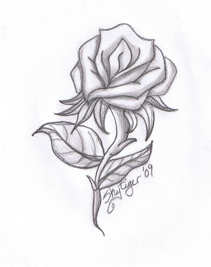 Drawn rose interesting On easy Best draw