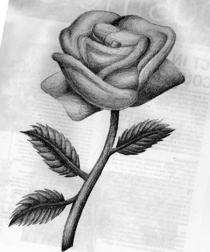 Drawn rose i love you Beautiful more drawn best and