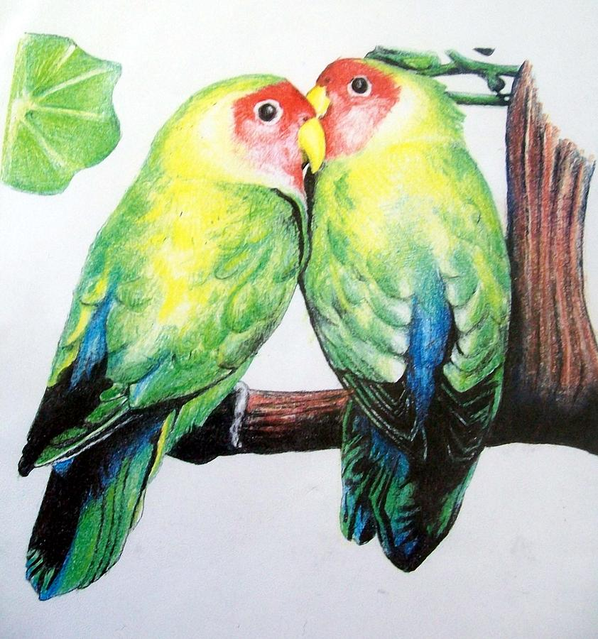 Drawn lovebird Love Hansen Love Drawing David