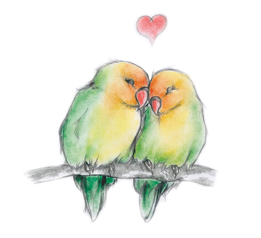 Drawn lovebird Drawings Bird Cute Birds Love