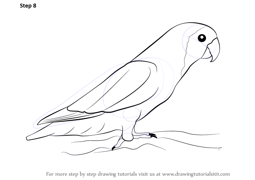 Drawn lovebird Of by Complete drawing bird