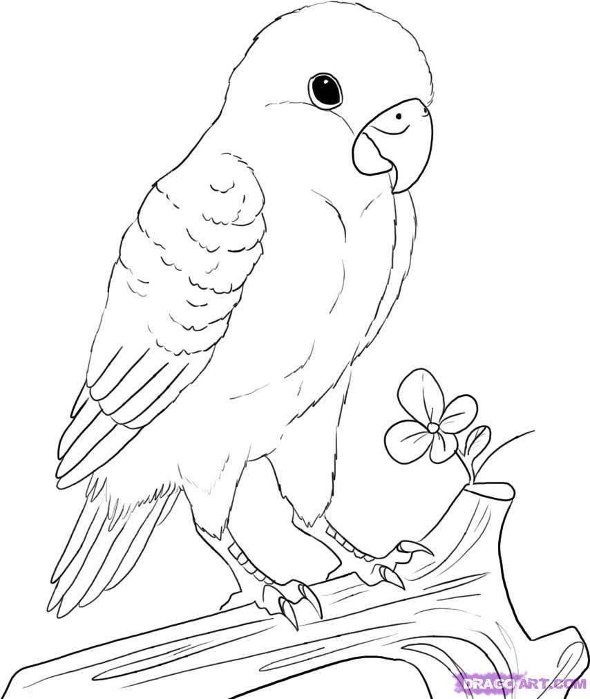 Drawn lovebird In Bird Love drawings Love