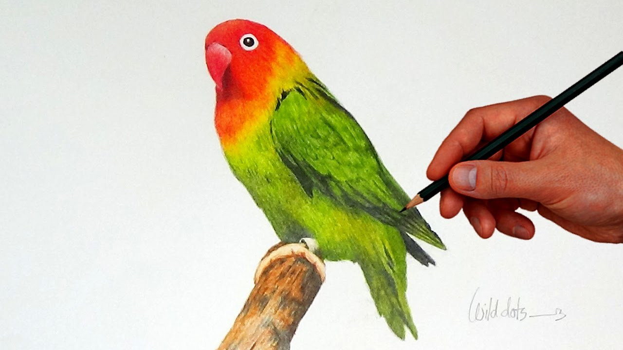Drawn lovebird Bird Pencils Drawing Love Colored