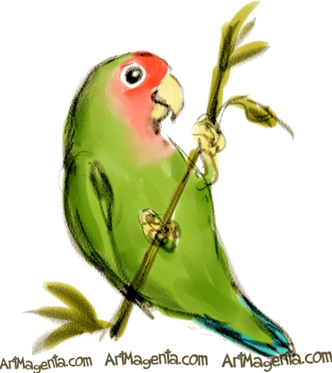 Drawn lovebird Birds: Rosy Lovebird Lovebirds faced