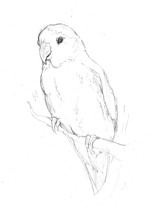 Drawn lovebird In Bird Love drawings Love