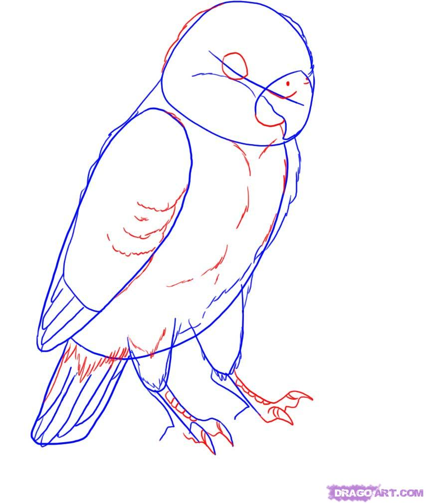 Drawn lovebird A step how draw lovebird