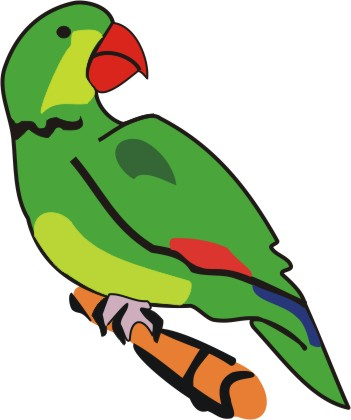 Parrot clipart for kid  Color coconut templates paint
