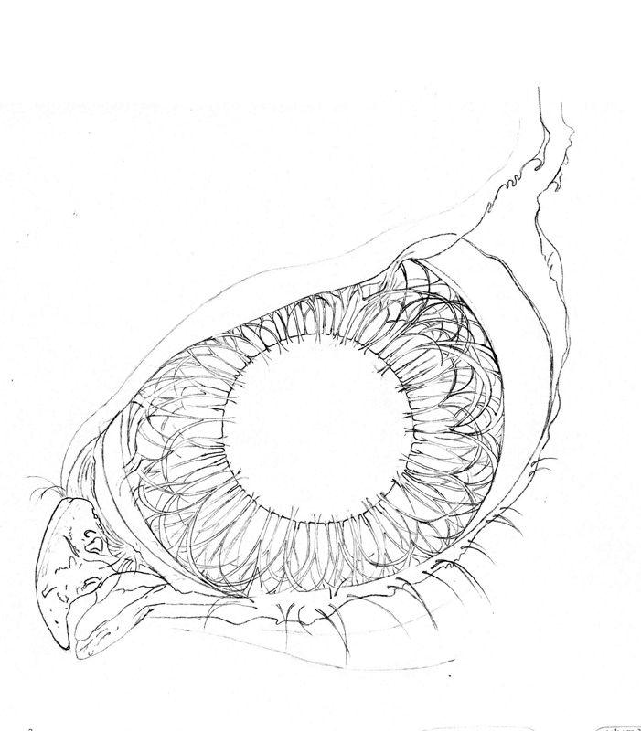 Drawn hawk hawk eye Hawk 40 +Eye images on