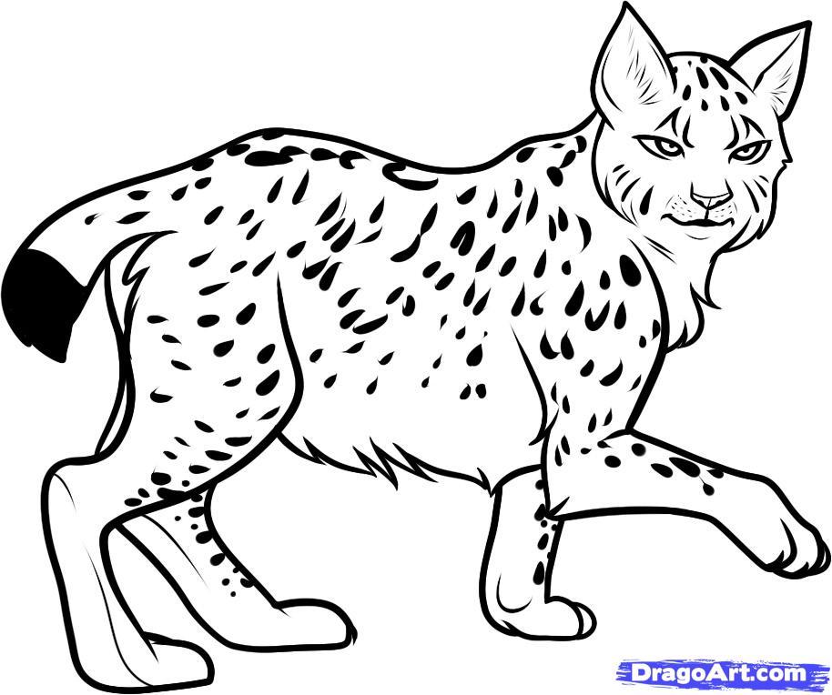 Drawn lynx Men Lynx Design Tattoo &