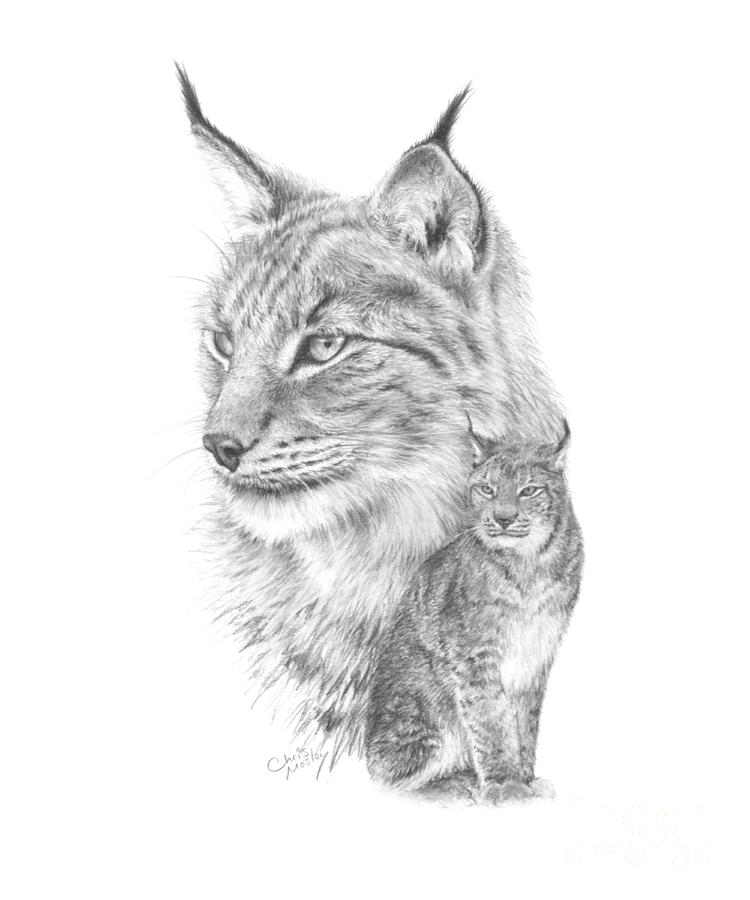 Drawn lynx Of tattoo the head and