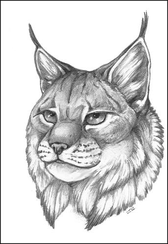 Drawn lynx Josie E lynx  Pin