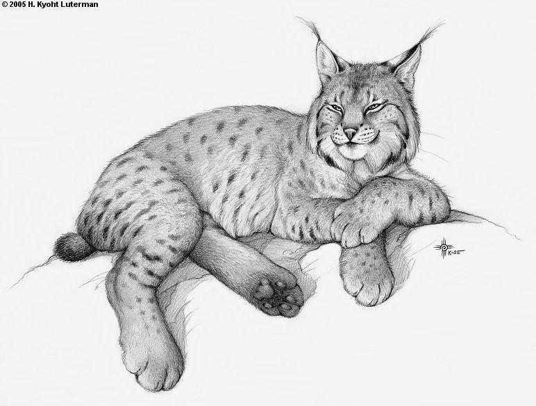 Drawn lynx Kamirah on Lynx DeviantArt kyoht