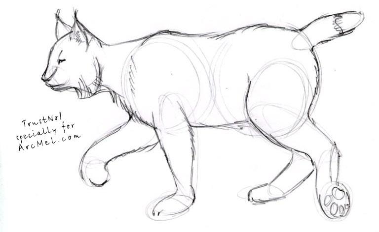 Drawn lynx 4 How step COM ARCMEL