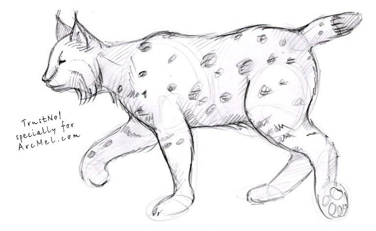 Drawn lynx 5 How step COM ARCMEL