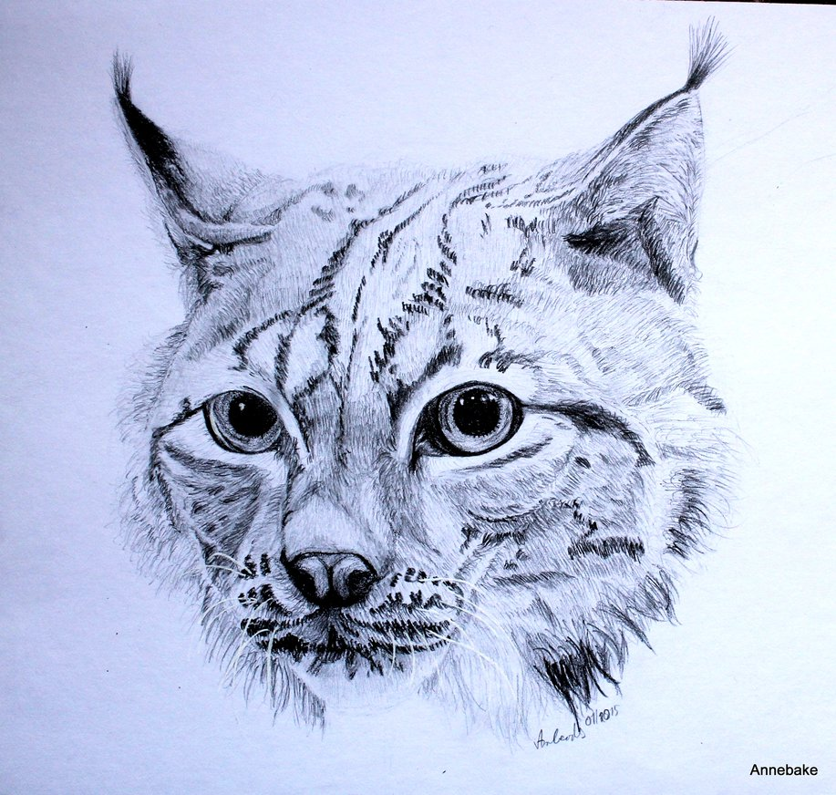 Drawn lynx Drawing by Anbeads Anbeads DeviantArt