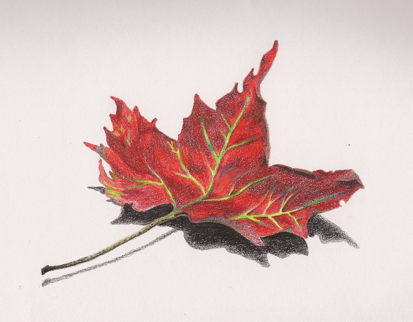 Drawn leaves shaded leaf Colored Drawings Leaves  Drawing