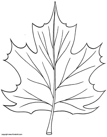 Drawn leaves maple tree KinderArt Maple KinderArt com Coloring