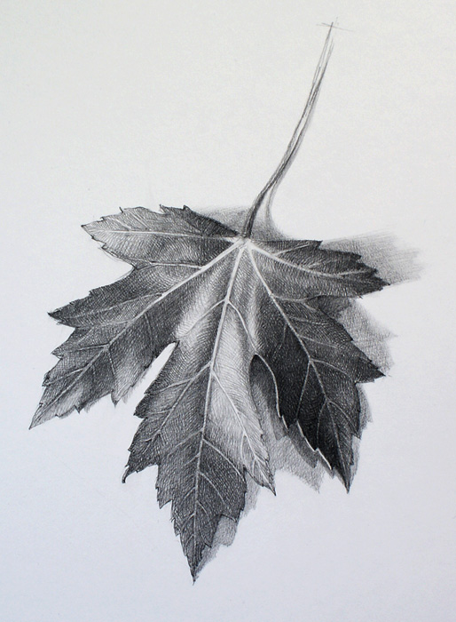 Drawn leaves tonal Drawing a Drawing Video Academy