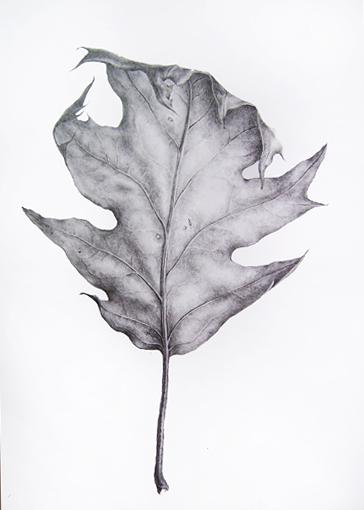 Drawn leaves tonal Week Dianne 2 Sutherland: 30/30