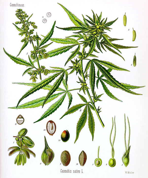 Drawn pot plant stoned Forums A get Growing need