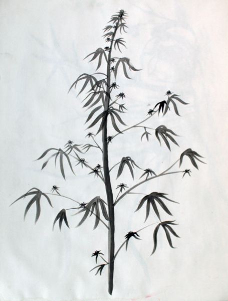 Drawn pot plant leaf illustration Botanical Reproduction 80 Reproduction Kingdom