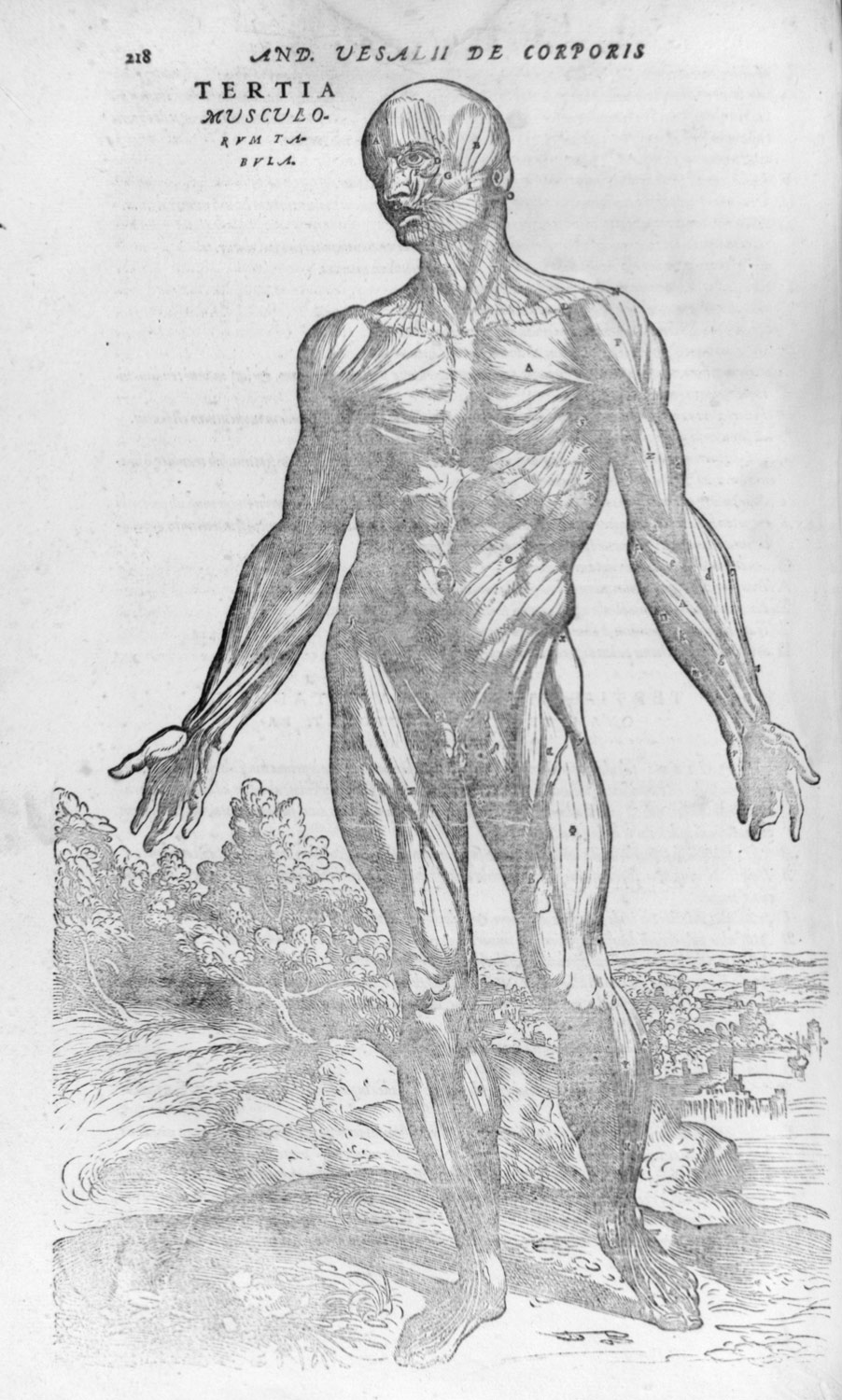 Drawn figurine human body structure Fabrica Art Structure (Of the