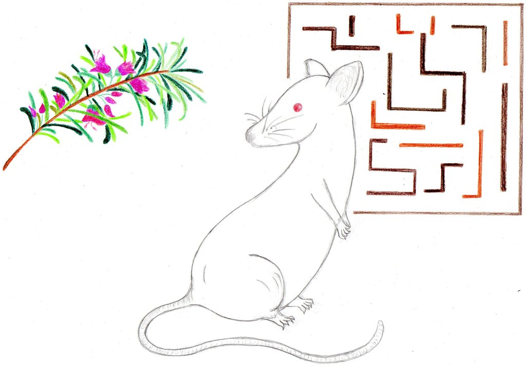 Drawn maze flower for algernon Algernon TershDersh DeviantArt Flowers on