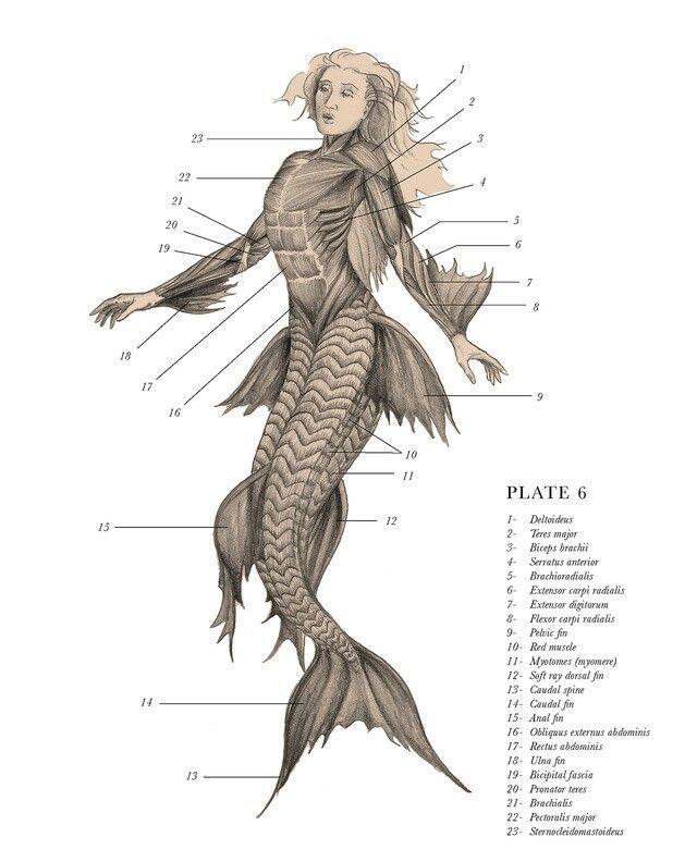Drawn skeleton real Skeleton Mermaids Mermaid ideas 25+