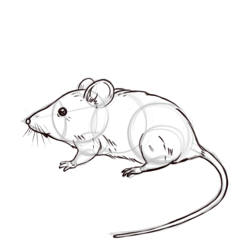 Drawn mice Titled Image Draw Mouse wikiHow