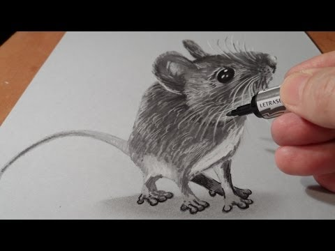 Drawn rodent 3d hd Trick to Lapse Time Mindbenders