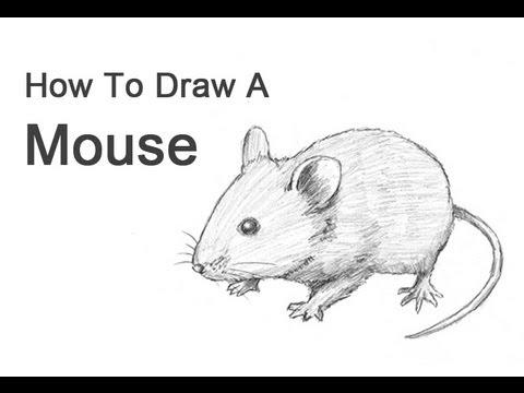 Drawn rodent  wikiHow 3 Ways Draw