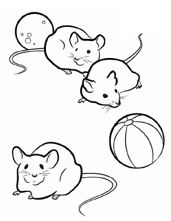 Drawn rodent baby mouse Pig Guinea Three Page: Three