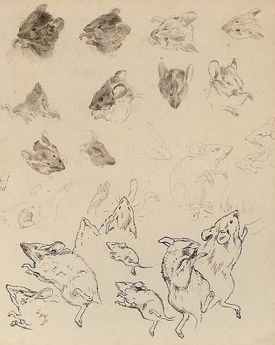 Drawn rodent beatrix potter Rarities of field mice Beatrix