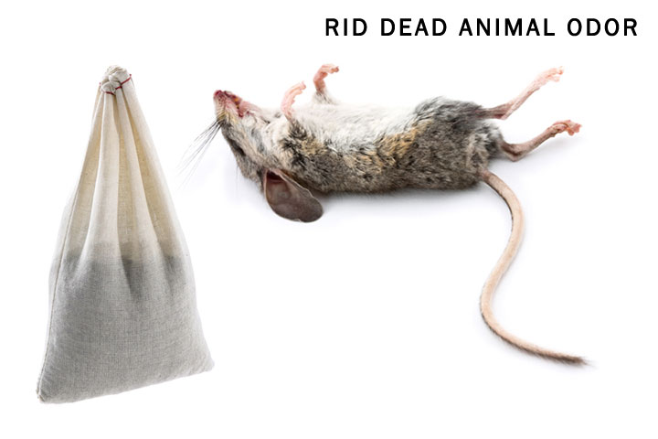 Drawn rodent dead Mouse to Dead Rid How